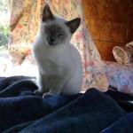 cats_cat